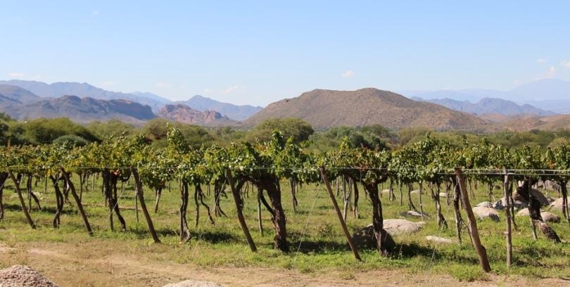 Vinhas da Bodega Colomé, Província de Salta