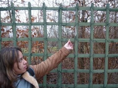 Passarinho folgado em Versailles